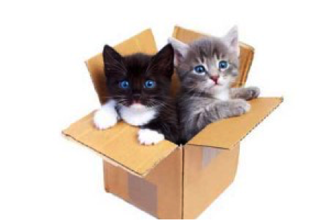 black and grey kittens in a cardboard box