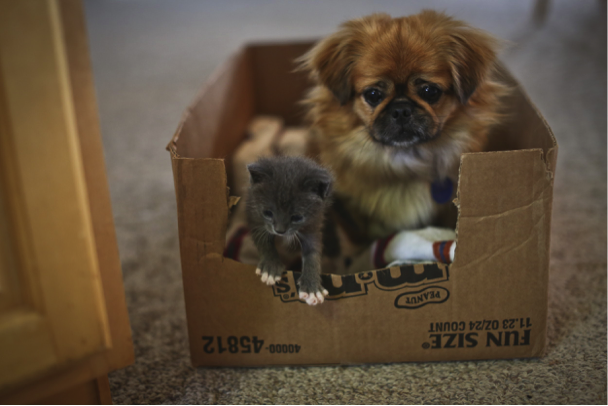 A kitten and a puppy in a box