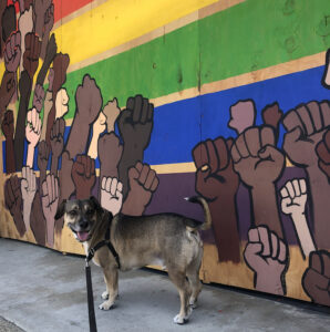 A short, long-body dog (it's a real cutie) stands in front of a boarded up window painted in raised fists over a rainbow.