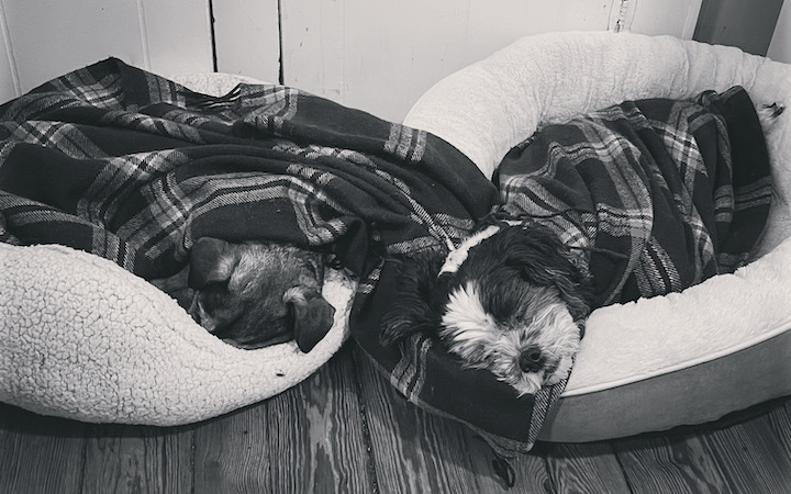 Two dogs, bundled up in a blanket and napping in dog beds